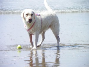 Misty's day at the beach, 9/11/11